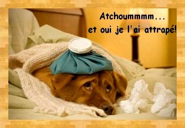 atchoum1