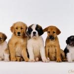 bebes_chiens_130