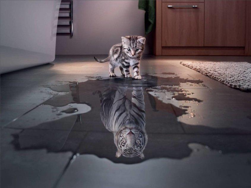 cica-tigris-tukrozodes-montazs-fantazia