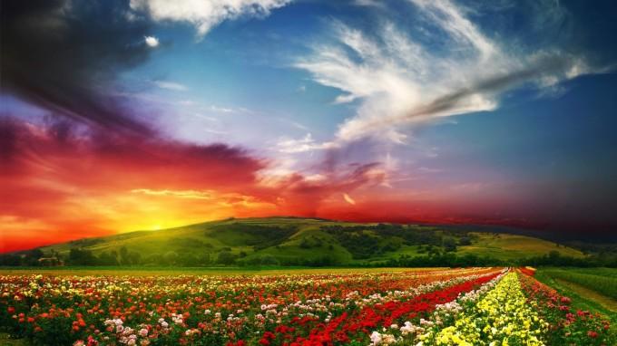 extra_sensationnel_paysage_fleurit_aux_couleurs_flamboyante