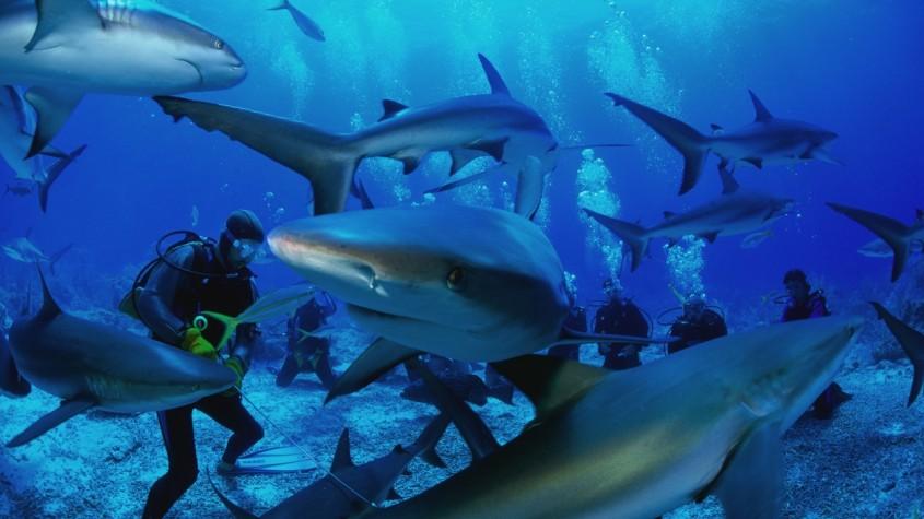 fond_marins_eblouissant_et_requin