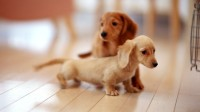 my-lovely-twin-maskot-puppies