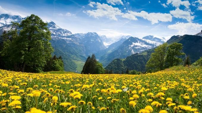 pissenlit_paysage_ciel_arbre_montagnes
