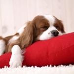 puppy_au_dodo_135