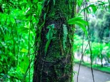 basilisk_lizard_reptile_camouflage_wood_moss_116129_1024x768