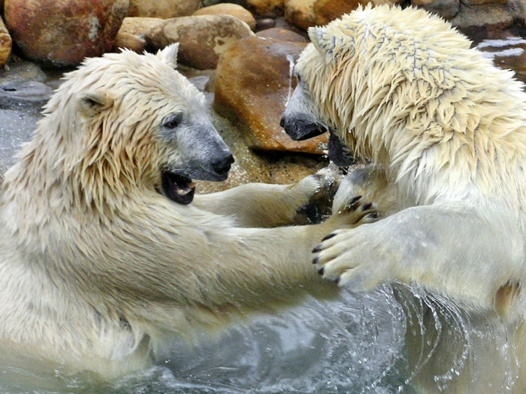 polar bear couple - photo #16