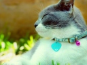 cat_collar_dazzling_light_spotted_26020_1024x768