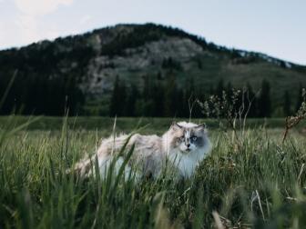 cat_furry_walk_grass_115918_1024x768