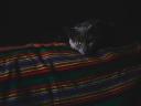 cat_gray_muzzle_dark_115905_1024x768