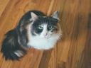 cat_muzzle_fluffy_116256_1024x768