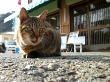 cat_old_asphalt_sit_tongue_1823_1024x768