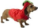 dog_dachshund_costume_beautiful_56031_1024x768