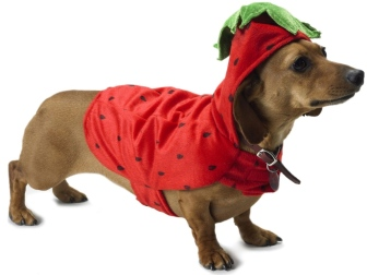 dog_dachshund_costume_beautiful_56031_1024x768