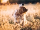 dog_grass_walk_sunlight_115372_1024x768
