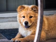 dog_muzzle_look_115945_1024x768