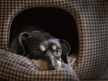 dog_muzzle_lying_eyes_115368_1024x768