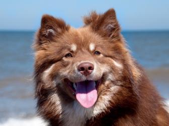 dog_muzzle_tongue_fatigue_40397_1024x768