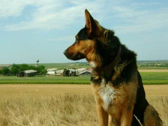 dog_sheep_grass_sit_44749_1024x768