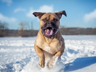 dogs_snow_jump_85432_1024x768