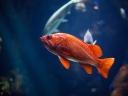 fish_underwater_world_red_115913_1024x768