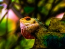 iguana_reptile_scales_color_115998_1024x768