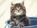 kitten_fluffy_bucket_sitting_snout_40440_1024x768