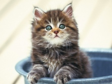 kitten_fluffy_bucket_sitting_snout_40440_1024x768