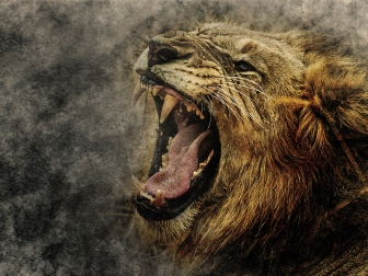 lion_art_grin_muzzle_116044_1024x768