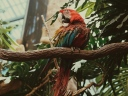 macaw_parrot_bird_colorful_116096_1024x768