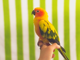 parrot_bird_colorful_115739_1024x768