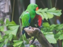parrot_green_birds_color_116249_1024x768
