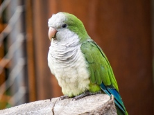 parrot_monk_parakeet_color_bird_116187_1024x768