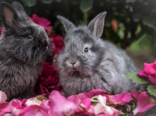 rabbit_rabbits_fluffy_gray_flowers_115903_1024x768