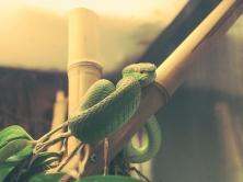wood_snake_snake_terrarium_reptile_116268_1024x768