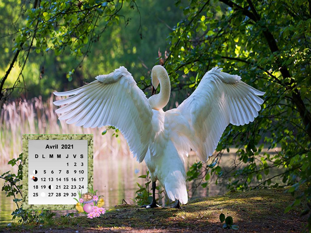 SwansWing8912