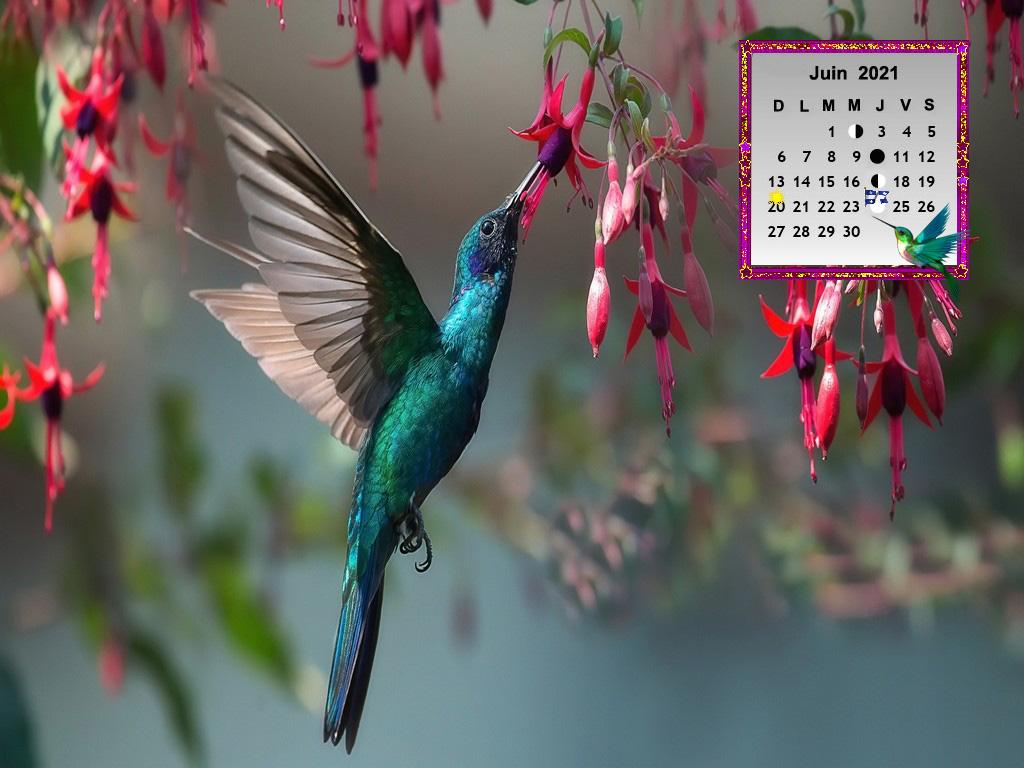 BirdsColibri5999