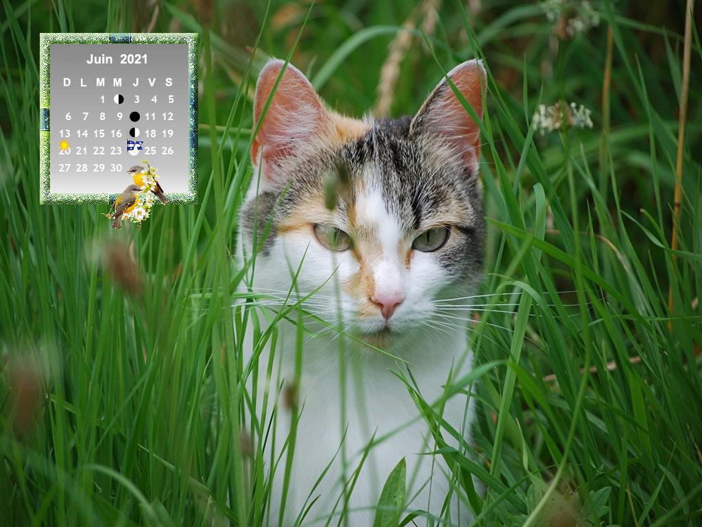 CatsGrassGlanc602
