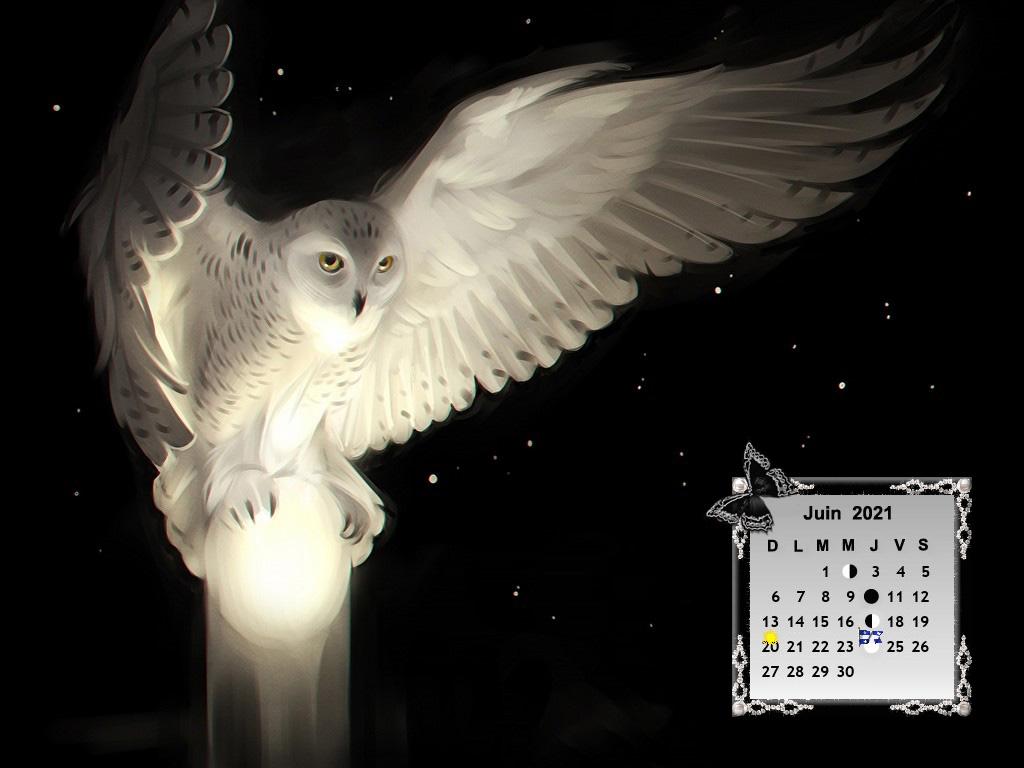 OwlsWingsWhiteBlackh