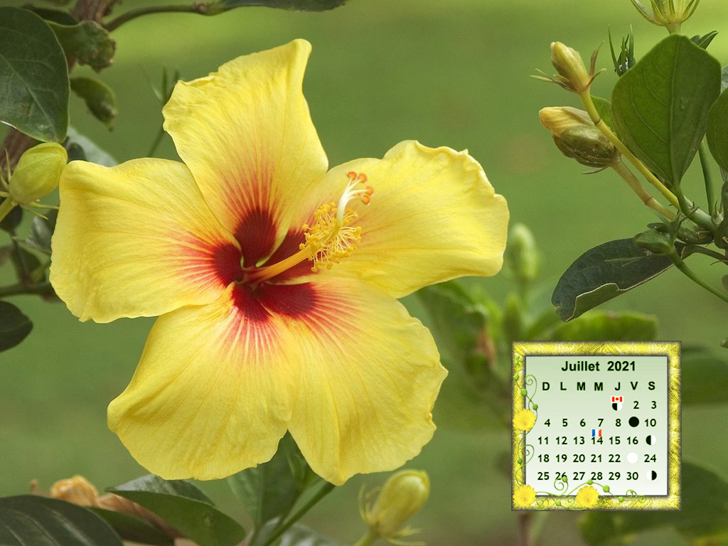Hawaii, Yellow hibiscus blossom with a bright red center.