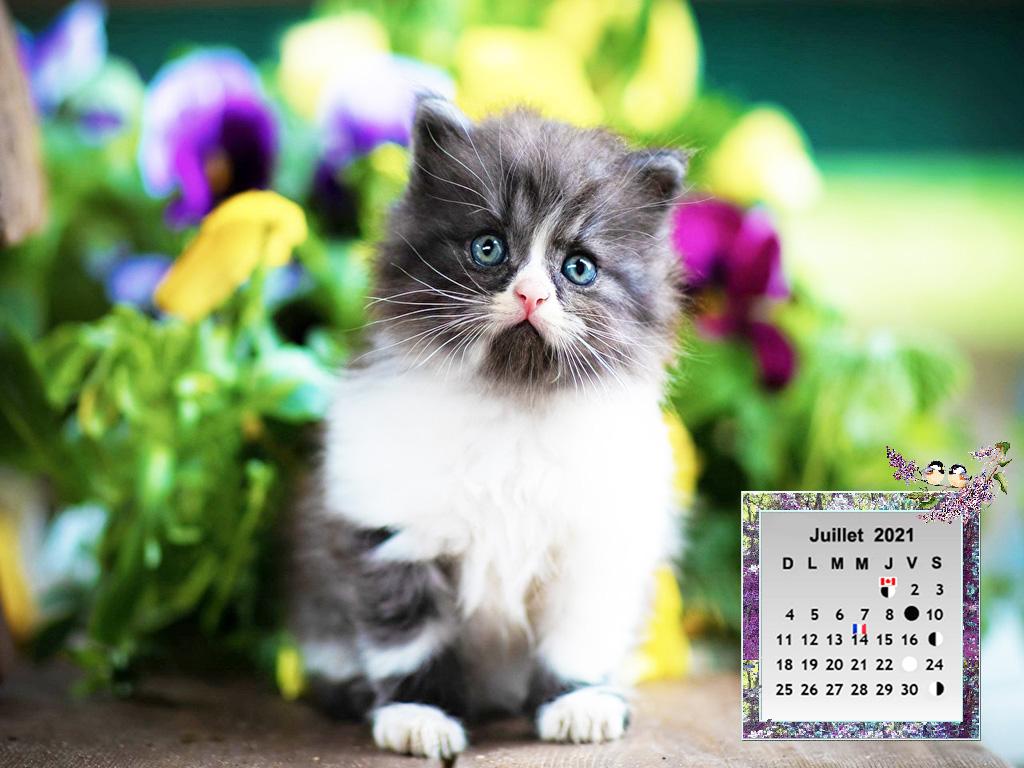Cats_Boke53