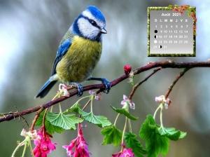 birds-floral-perched-c