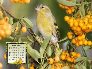 Birds_Berry_Eurasian