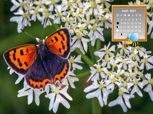 Butterflies_Insects