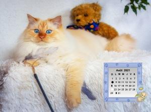 Cats_Teddy_bear