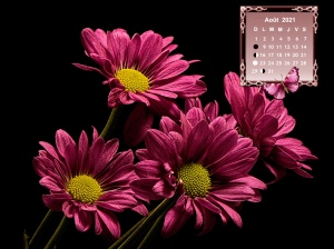 Chrysanthemums24