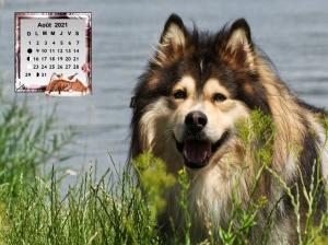 Dogs_Finnish