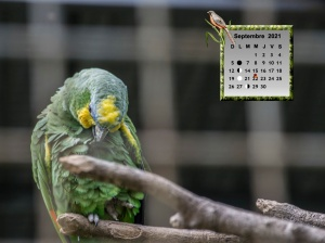 pecszoo-papagaly