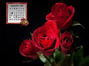 Roses_Black